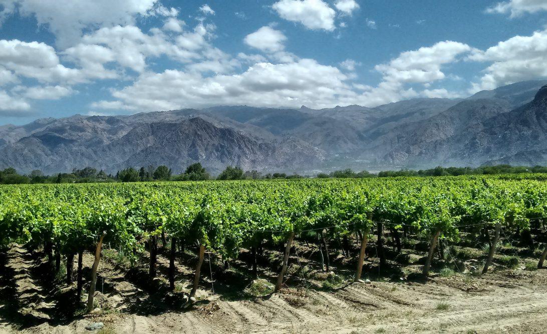 wijn plantage
